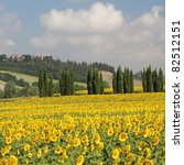 tuscan scenery with sunflowers and cypresses, Italy - stock photo