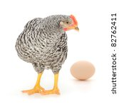 grey hen with egg isolated on white, studio shot - stock photo