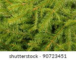 Green fir tree branch; natural forest background - stock photo