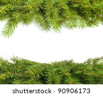 Green fir tree branch on white background - stock photo