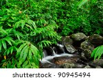 Puerto Rico rain forest - stock photo