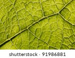 tree leaf close up - stock photo