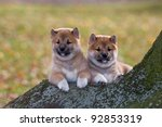 Two nice puppies sitting - stock photo