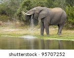 African Elephant Bull (Loxodonta africana) drinking water from a natural pan in South Africa's Kruger National Park - stock photo