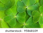 a texture of shamrock, macro - stock photo
