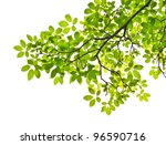 leaf isolated on white background - stock photo