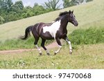 Nice paint horse running - stock photo