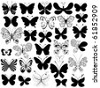 Big collection silhouette black butterflies for design isolated on white - stock photo