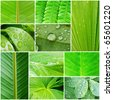 Collage of beautiful plant leaves depicting nature - stock photo