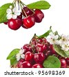fresh cherries with flowers isolated on white background - stock photo