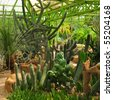 Various cactuses in a botanic garden - stock photo