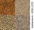 Set of leopard, gepard. tiger and zebra skins. - stock vector