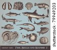 vector set: fish, shells and seafood (set 2) - variety of detailed vintage illustrations - stock vector